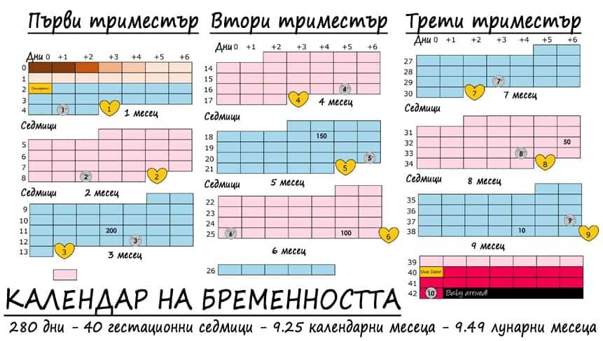 Календар на бременността